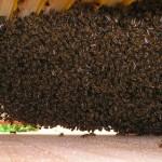 Das Innere der Bienenkiste am 29.4. abends