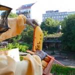 Honigernte am Kinderbauernhof