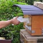 Der Verdunster kommt von hinten in die Bienenkiste
