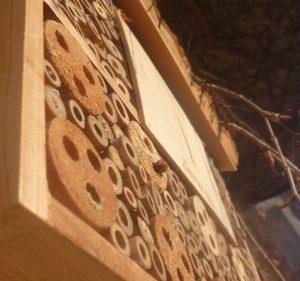 Kleinere Brötchen: Erstmal wilde Bienen in der Nisthilfe beobachten.